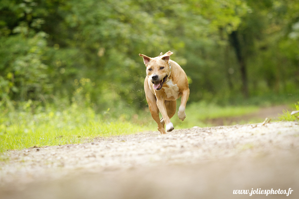 photographe_chien_cheval_animaux_nancy_luneville-12