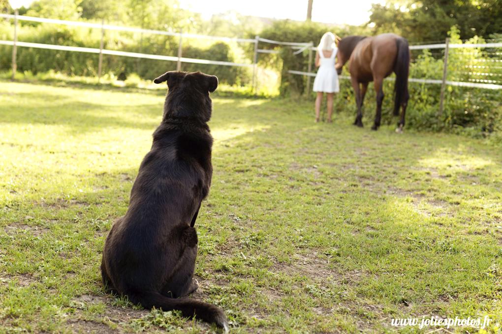 photographe_chevaux_animaux_nancy_luneville-1