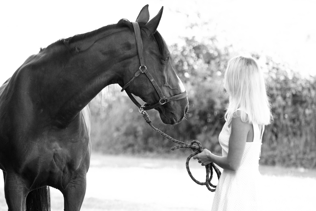 photographe_chevaux_animaux_nancy_luneville-20