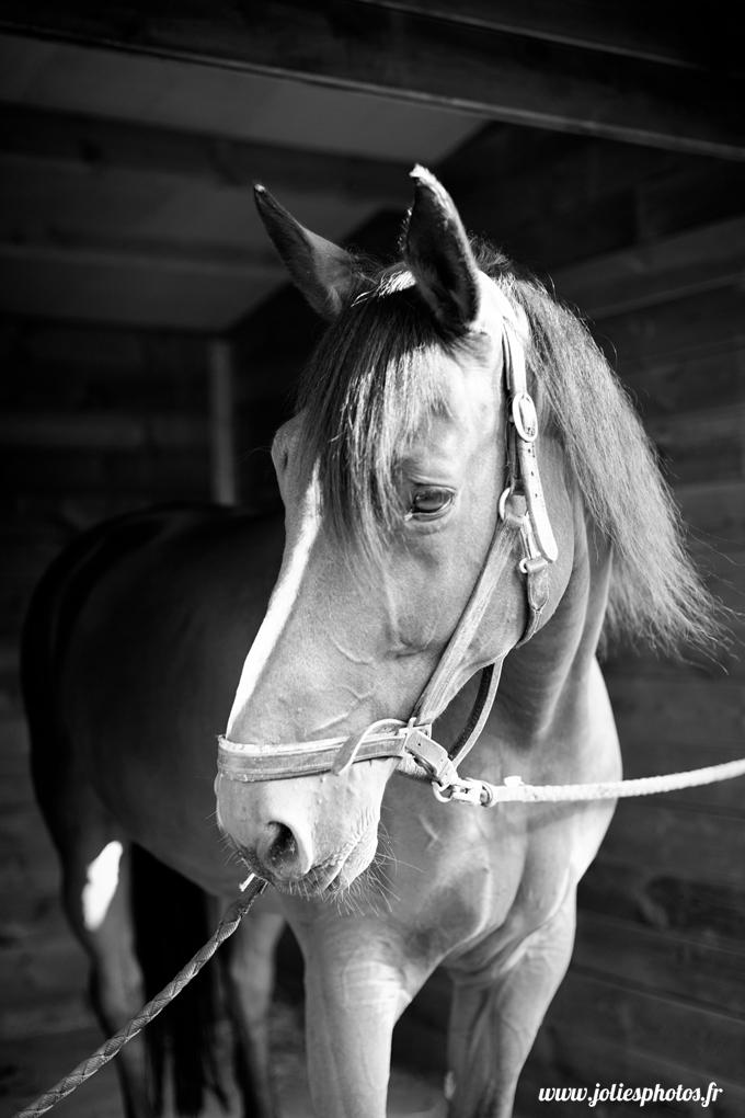 photographe_chevaux_animaux_nancy_luneville-29