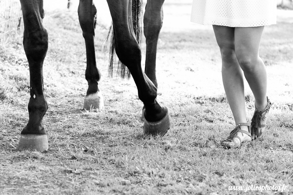 photographe_chevaux_animaux_nancy_luneville-9